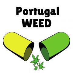 Portugalweed.com o melhor haxixe e maconha ao seu alcance em casa em Portugal, ilhas, cabo verde e brasil! Frete 100% seguro- portugalweed92@gmail.com 0034674494794 portugal cannabis companies comprar maconha tudo portugal a melhor maconha de portugal à sua disposição em lisboa, cascais, porto, faro, qualquer lugar em portugal, entrega a domicílio da espanha 100% segura, experimente o nosso excelente serviço!