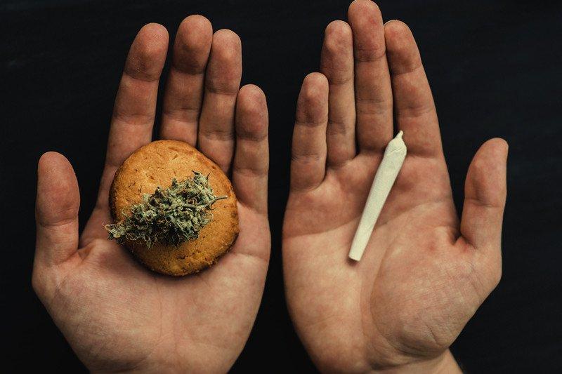 EAT VS. FUMO DE CANNABIS: COMO O CORPO REAGE?