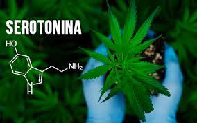 Maconha e serotonina: tudo o que você precisa saber